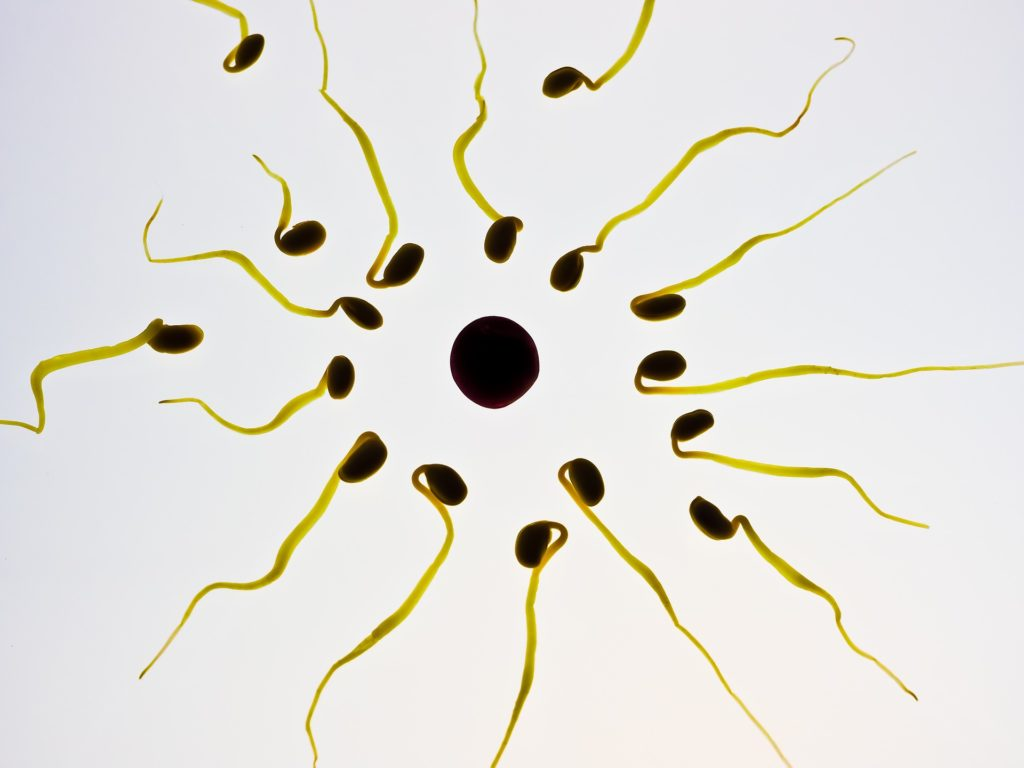 Kvaliteta i zrelost jajnih stanica u postupku IVF-a